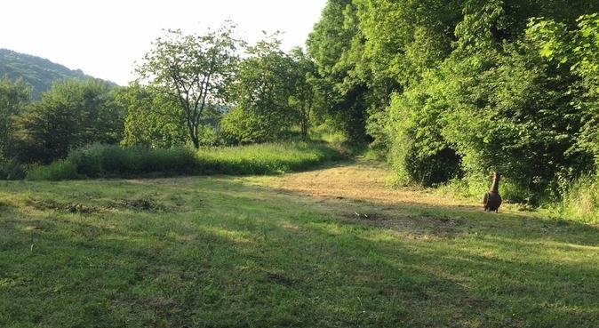 Fun, Play And Lots Of Countryside Walks., dog sitter in Bewdley
