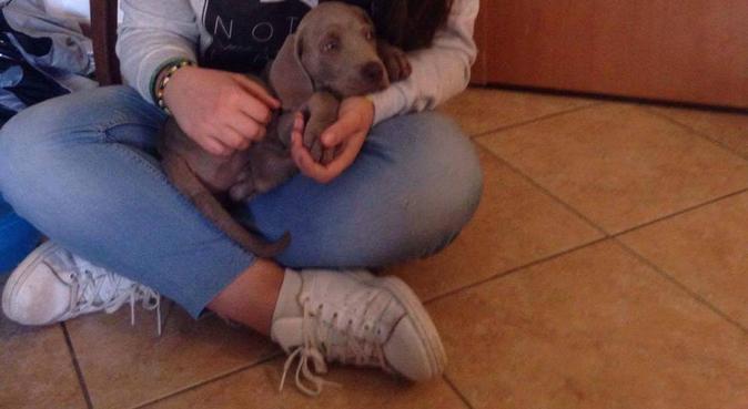 Gioco, passeggiate e prendersi cura, dog sitter a San Mariano