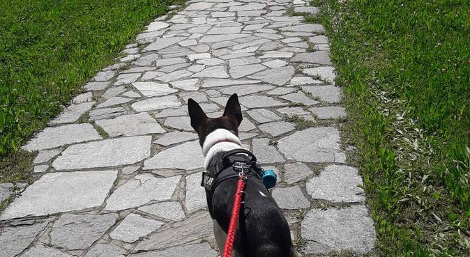 Casa amorevole e sicura per il tuo cane/gatto, dog sitter a Torino, Turín, Italia