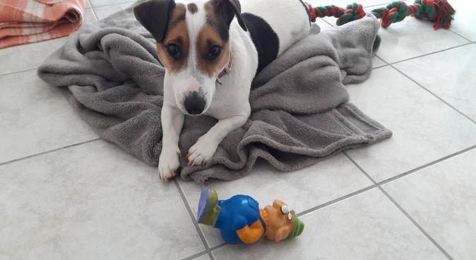 Les animaux : une raison de vivre, dog sitter à Reims