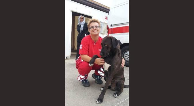 La donna che sussurra a i cani, dog sitter a catania