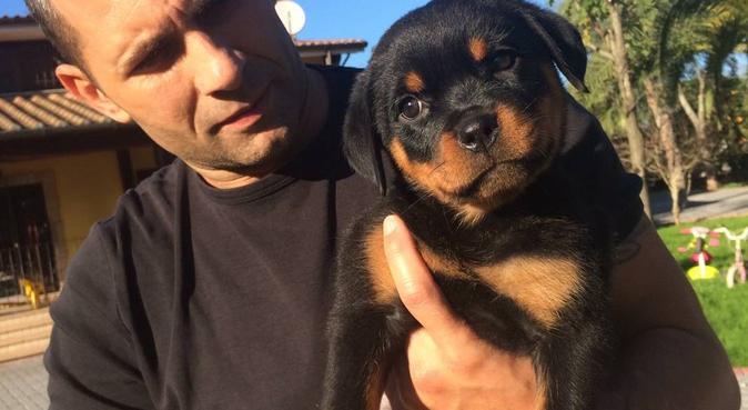 Coccole o educazione siete in mano al migliore!!!, dog sitter a San Cesareo