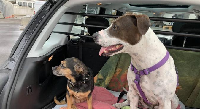 Divertimento assicurato per il tuo miglior amico!, dog sitter a Firenze, FI, Italia