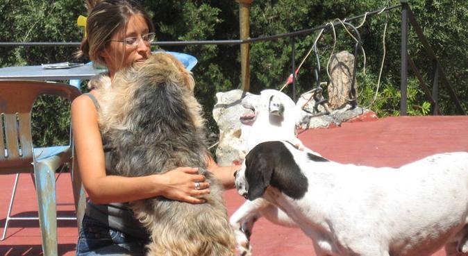 Coccole e tante passeggiate all'aria aperta!!!!, dog sitter a Formigine