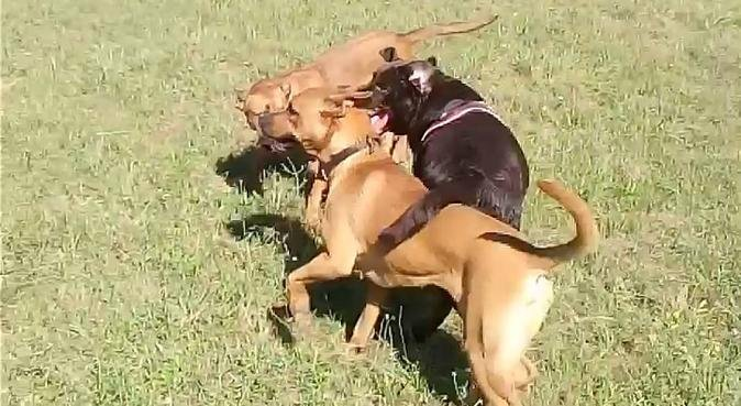 Ici, les chiens sont rois!, dog sitter à Fuveau