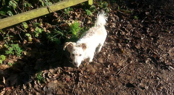 Dog Day Care & Walking, dog sitter in Sutton