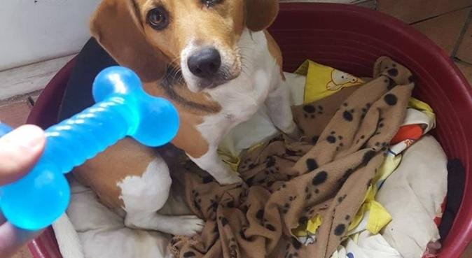 Coccole e tanto amore  per i nostri amici animali!, dog sitter a Palermo
