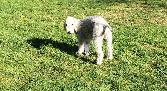 Des journées merveilleuses avec vos chiens !, dog sitter à Aix-en-provence