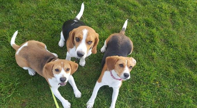 Dog loving family house in Cardiff, dog sitter in Cardiff