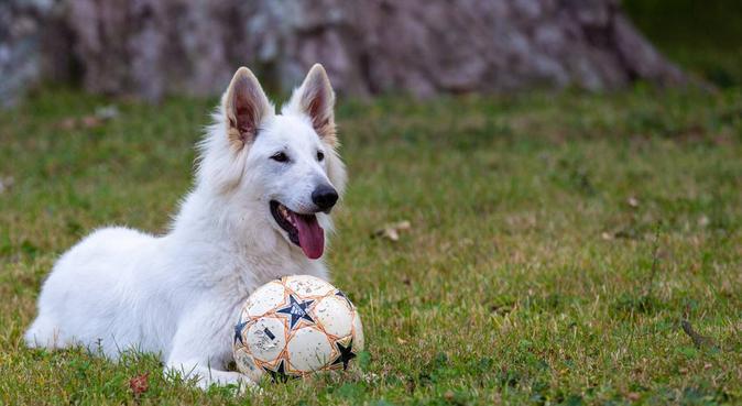 Garde de chiens chez les vétos !!, dog sitter à Grézieu-la-Varenne