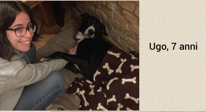 Coccole e divertimento con grandi amanti di cani, dog sitter a Udine, UD, Italia