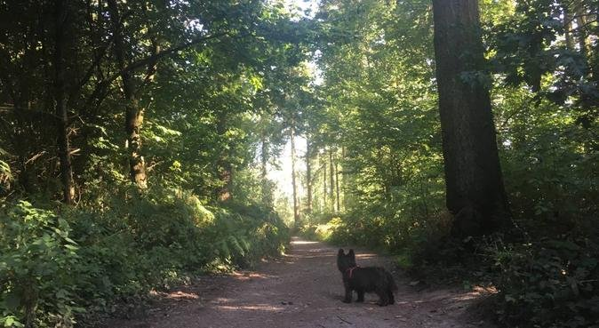 Long walks and cuddles in the countryside, dog sitter in Frome