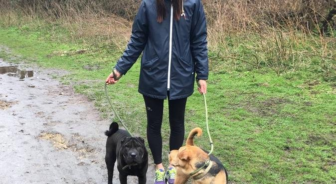 Dog happy activity and caring in Cambridge, dog sitter in Cambridge