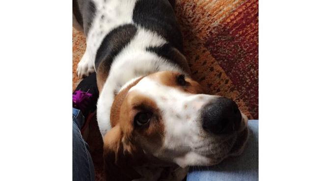 Cuddles' Dog Walking & Care, dog sitter in London
