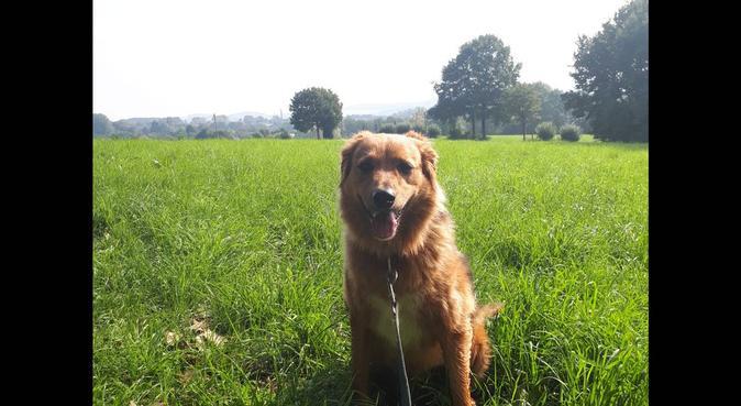 Begleiter für einen schönen Spaziergang gesucht, Hundesitter in Wuppertal