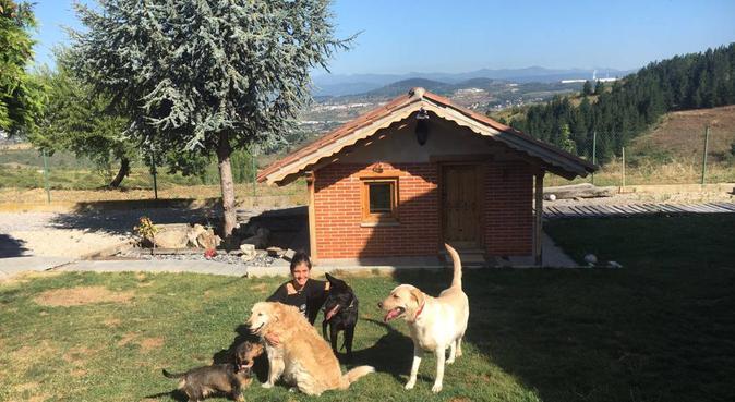 Amante de los perros con casa con amplio jardín, canguro en Ponferrada