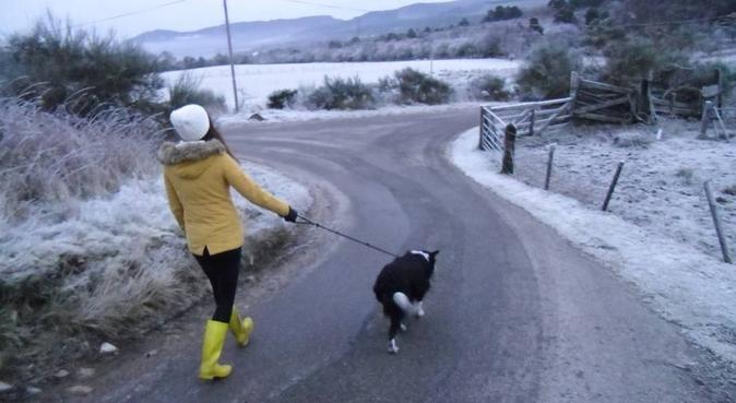 Friendly and caring Dog Sitter, dog sitter in Edinburgh