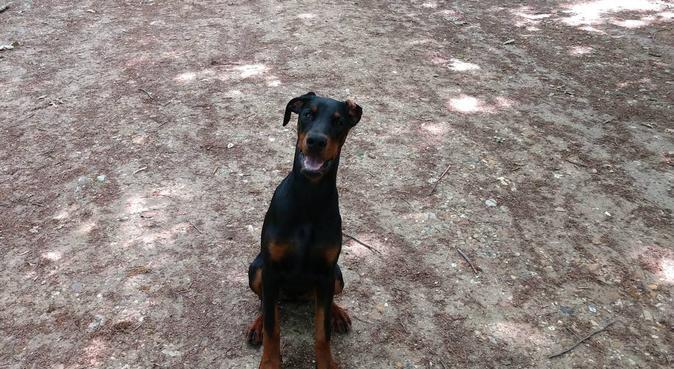 Beaucoup d'amour et de jeux, dog sitter à Saint-Germain-en-Laye