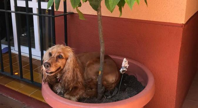 Cariño y mucho cuidado para tus mascotas, canguro en San Fernando