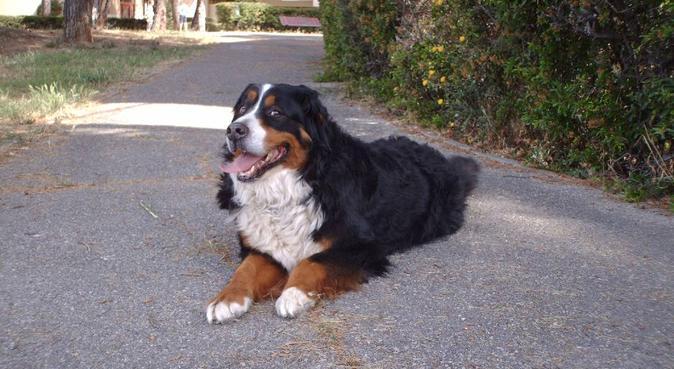Une Nounou près de chez vous, dog sitter à Aix-en-provence
