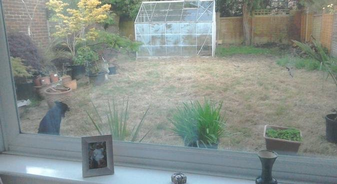 Fun and Fresh Air in Horley., dog sitter in Horley