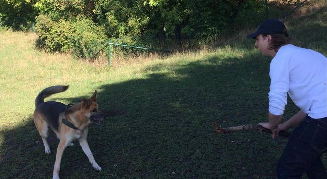 Hundpassning i Bandhagen!, hundvakt nära Bandhagen