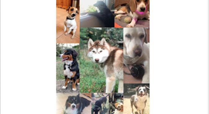 L'amour au naturel à la Bouilladisse, dog sitter in La Bouilladisse
