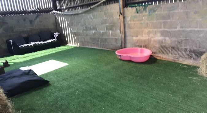 Cool Canines Daycare in Oxford, dog sitter in Oxford