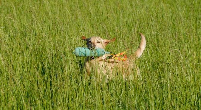 Trygg hundpassning i lantlig miljö, hundvakt nära Kågeröd