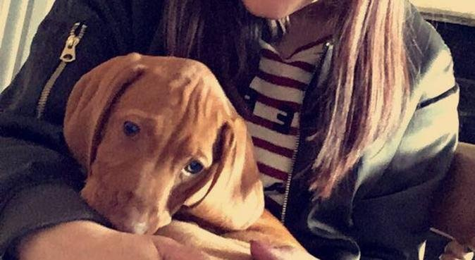 Excersise and Snuggles for all dogs!, dog sitter in York