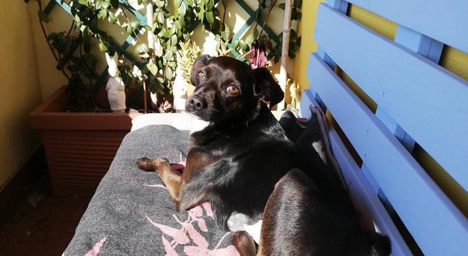 Tante coccole e passeggiate divertenti, dog sitter a Villafranca Padovana, PD, Italia