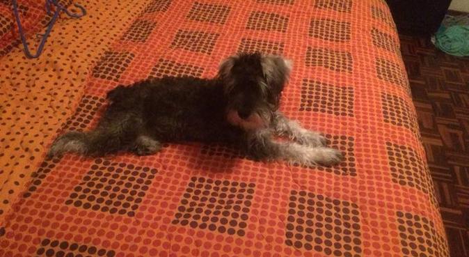 Resort para perros, canguro en Madrid