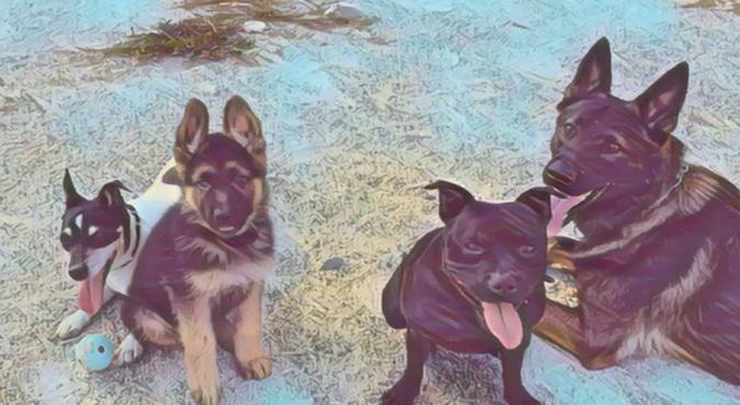 Les promenades avec maga, dog sitter à Saint-André-de-la-Roche