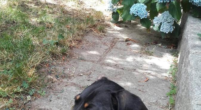 Estancia para perros pequeños en Parque Natural, canguro en Cercedilla