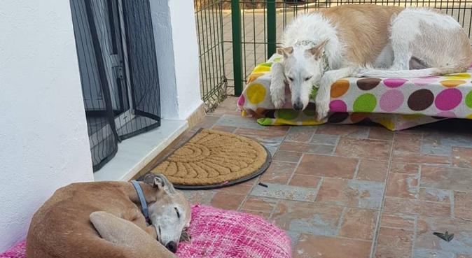El paraíso!, canguro en Carmona