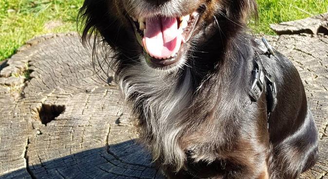Un coin de campagne près de Nantes, dog sitter à Couëron