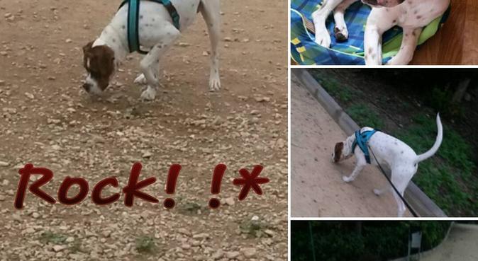 !!El rincón de la diversión canina!!, canguro en San Vicente Del Raspeig