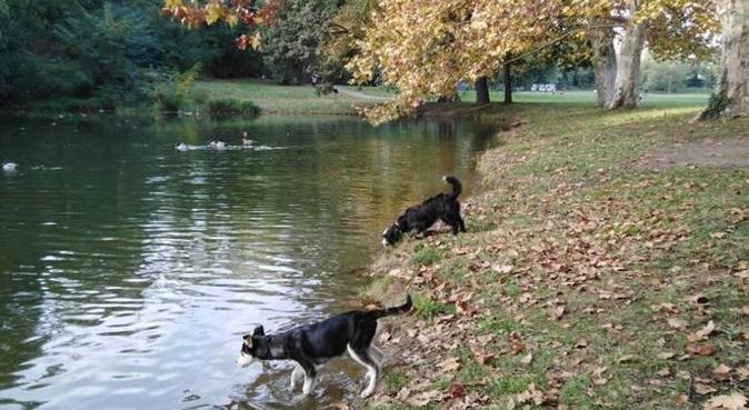 Garde d'animaux en tout genre!, dog sitter à Toulouse