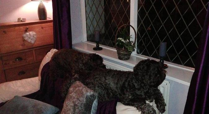 The Muttley Crew means contentment for you, dog sitter in Blackpool