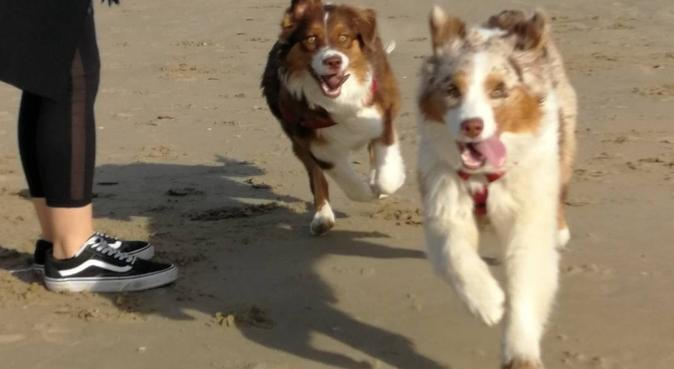 Passeggiate, divertimento e tante coccole!, dog sitter a Milano