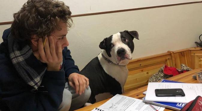 una casa a misura di cane, dog sitter a Padova