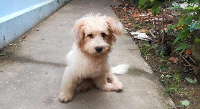 Bien dans ses poils, bien dans ses pattes !, dog sitter à Gières, France