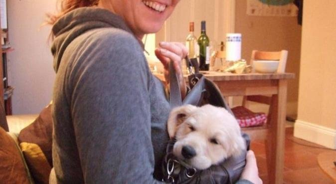 A doggo nanny to take care of your fur baby, dog sitter in York, UK