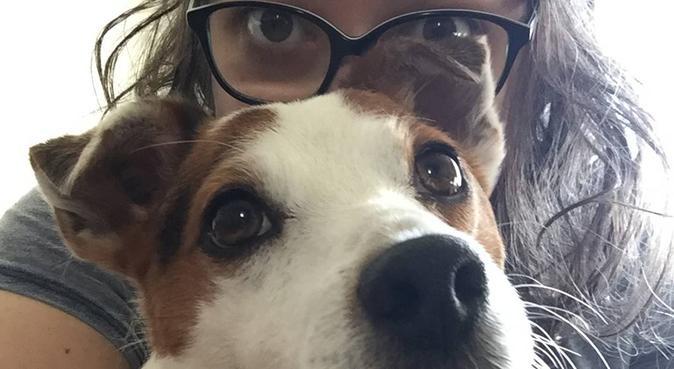 Passion truffes et câlins canins avec jardin !, dog sitter à Rennes