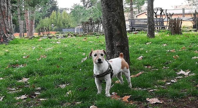 Vita da cani...felici!!, dog sitter a ROMA