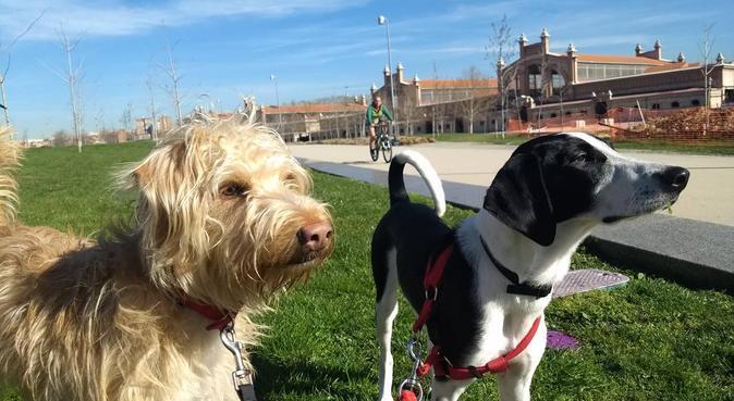 La tía y el tío guay de tu mascota, canguro en Madrid