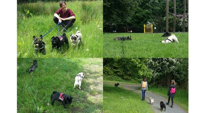 Tails and Wings Pet Care, Whitefield, dog sitter in Manchester