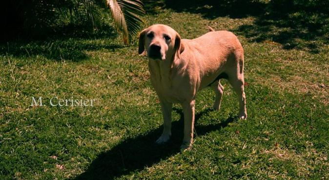 Au bonheur des toutous, dog sitter à Marseille, France