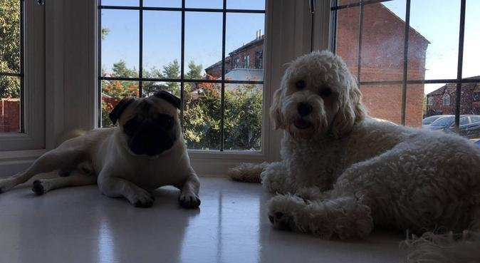 looking for new playmates in new area, dog sitter in Coleshill