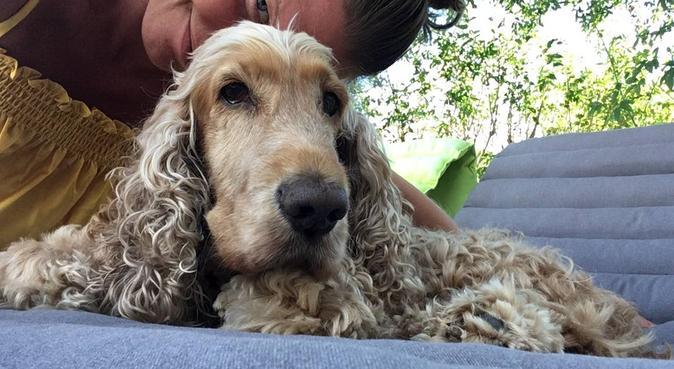 Au bonheur des chiens, dog sitter à Marseille
